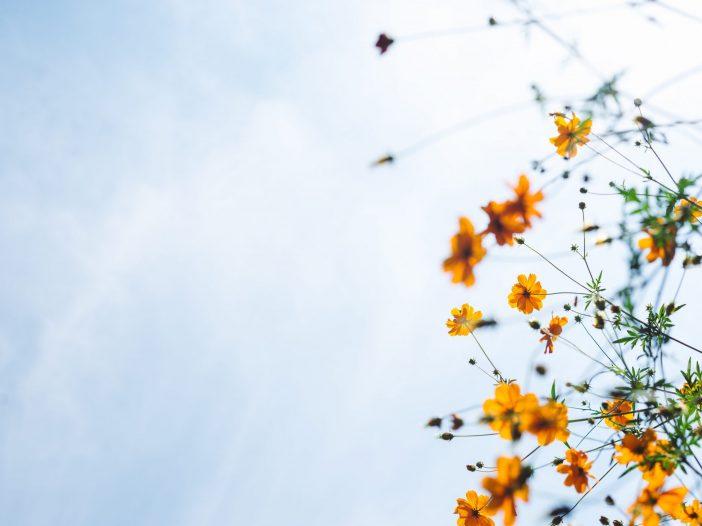 Blog Post - 3 Tips To Help You Feel Calmer